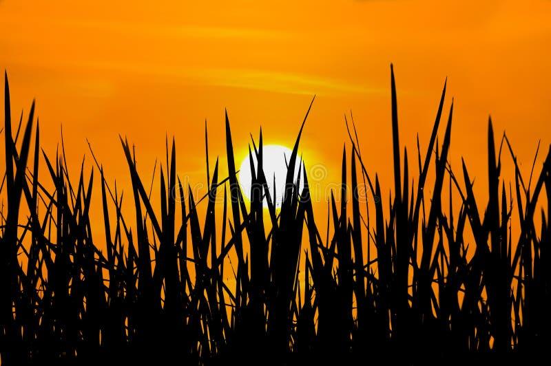 Gouden zonsondergang stock foto