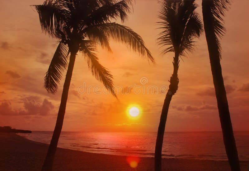 Gouden Zonsondergang bij het strand met palmen Het is in Cuba, Caraïbisch Varadero, Het is mooi natuurlijke achtergrond of behang royalty-vrije stock foto
