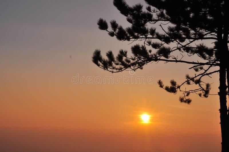 Gouden zonsondergang met bergmening en bomen royalty-vrije stock foto's
