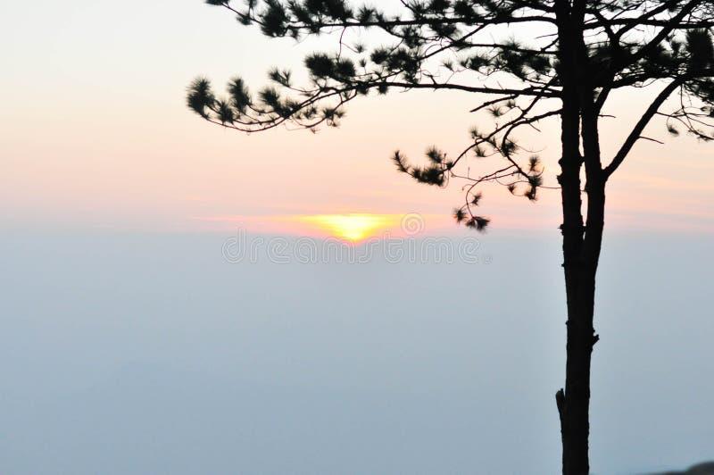 Gouden zonsondergang met bergmening en bomen royalty-vrije stock afbeeldingen
