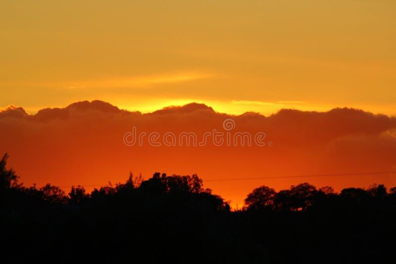 Gouden Zonsondergang met Bomen stock foto's