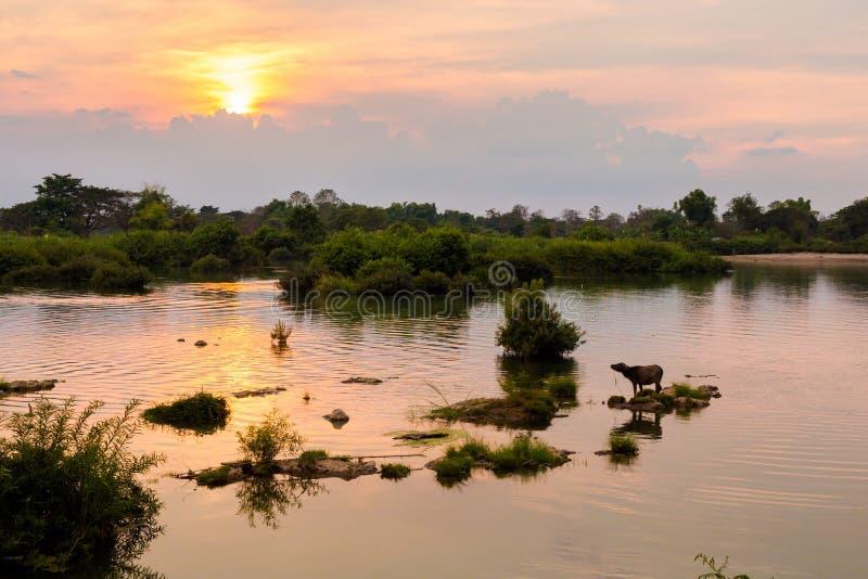 Gouden zonsondergang op Don Det stock foto