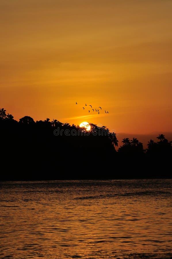 Gouden Zonsondergang over overzees met vogel het vliegen stock afbeeldingen