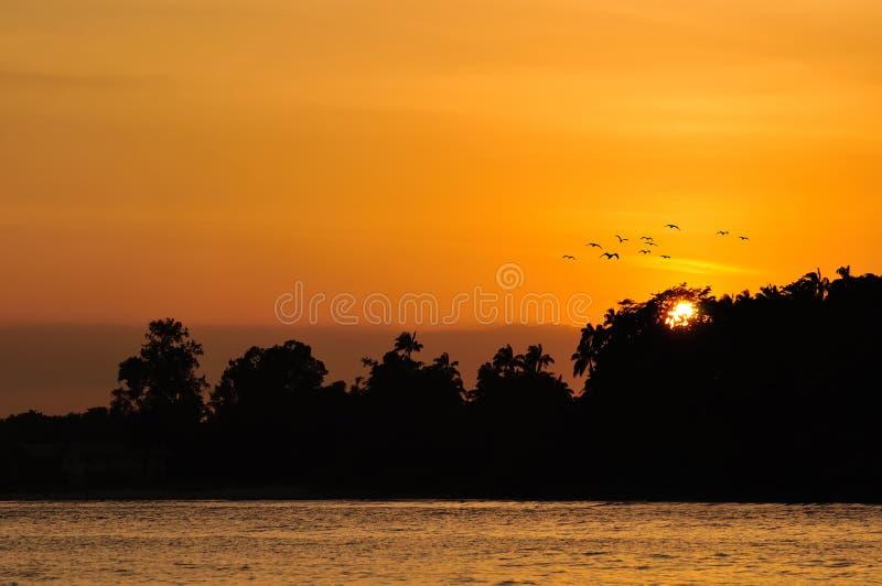 Gouden Zonsondergang over overzees met vogel het vliegen stock fotografie
