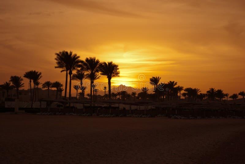 Gouden zonsondergangavond in berg en overzees strand Gele zonsondergang op bergoogst en palmen op kust met paraplu's royalty-vrije stock afbeelding