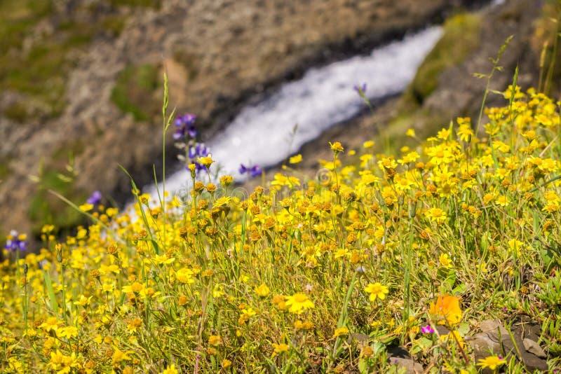 Goudveldwildflowers op de heuvels van de Berg van de het Noordenlijst, snel lopende kreek op de achtergrond, Oroville, Californië royalty-vrije stock foto