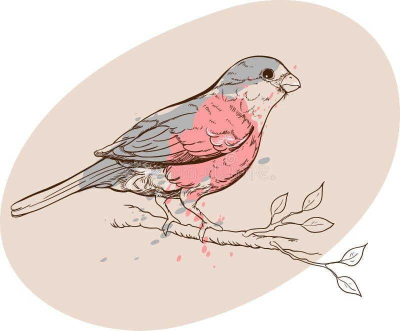 Goudvinkvogel op een tak royalty-vrije illustratie