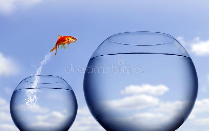Goudvis die uit het water springt royalty-vrije stock afbeelding