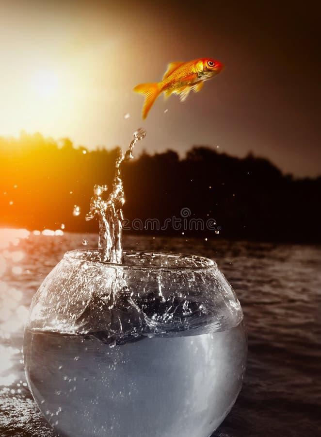 Goudvis die uit het water springt stock afbeeldingen