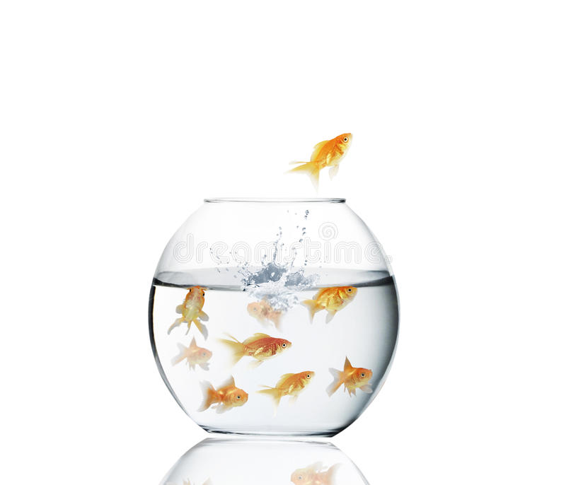 Goudvis die uit water springen stock foto