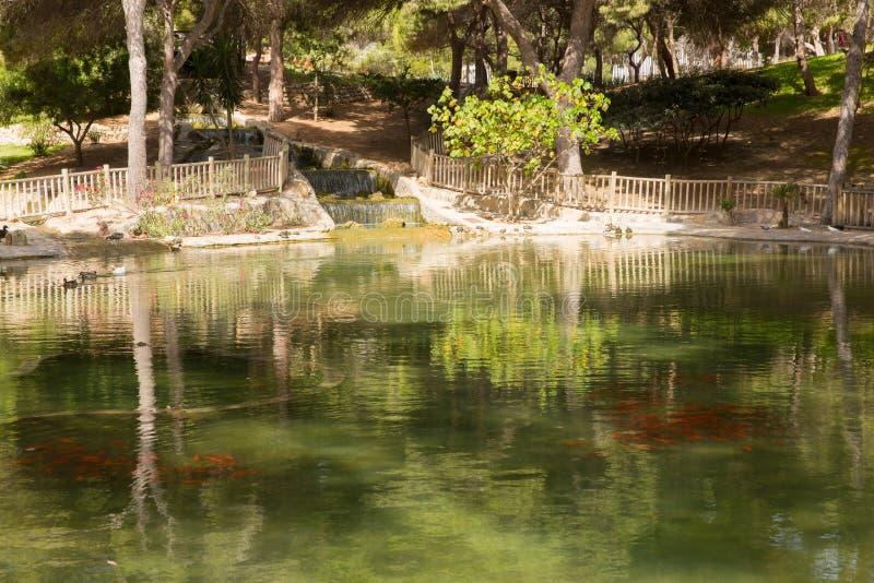 Goudvis in een vijver Reina Sofia Park Guardamar del Segura Spain stock afbeelding