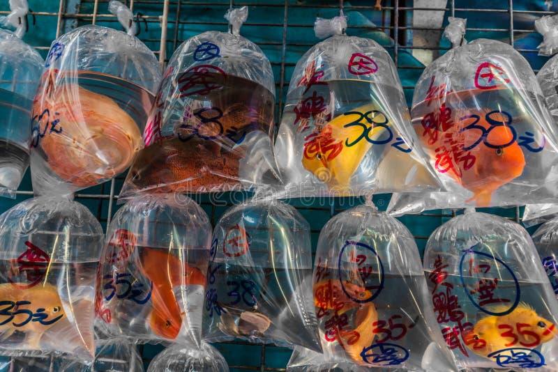 Goudvismarkt Mong Kok Kowloon Hong Kong royalty-vrije stock afbeeldingen