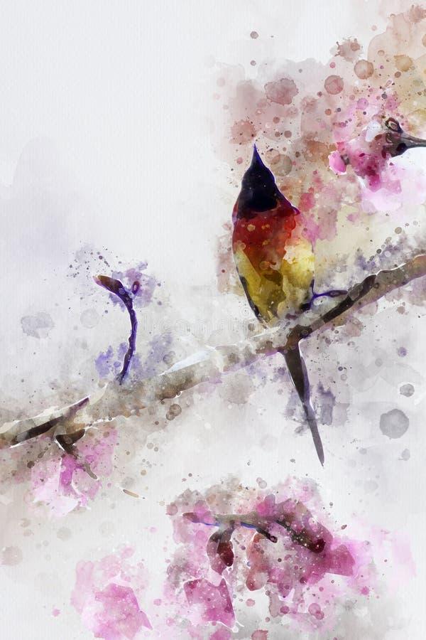 Gould& abstrato x27; s Sunbird ilustração do vetor