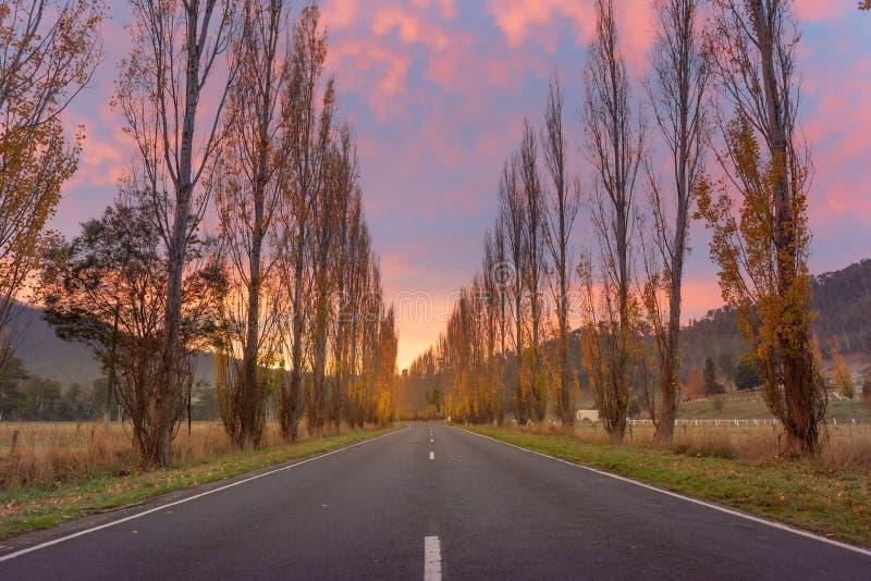Gould Memorial Drive på Buxton Marysville Road, Victoria arkivbilder