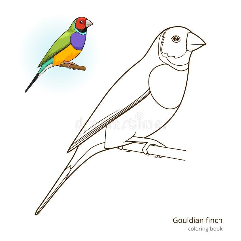 Gouldian finch kolorystyki książki ptasi wektor ilustracja wektor