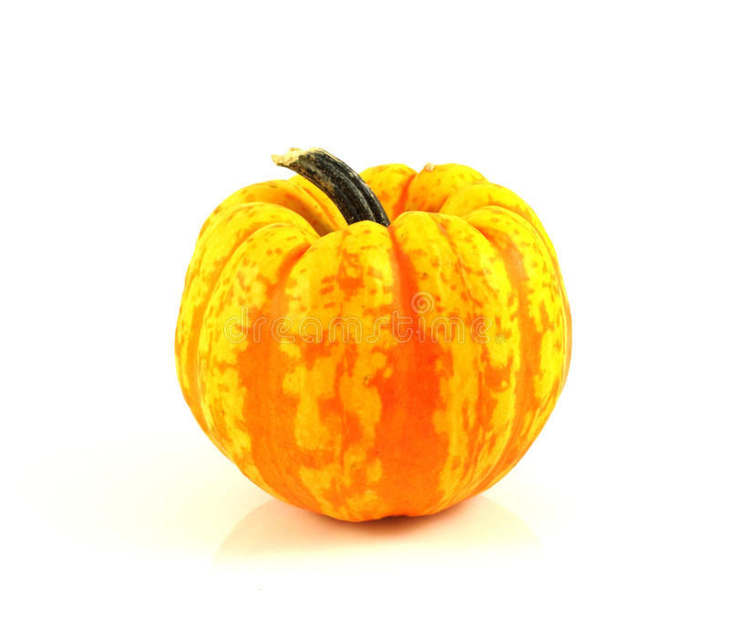 Download Gourd stock photo. Image of autumn, halloween, farm, background - 11302472