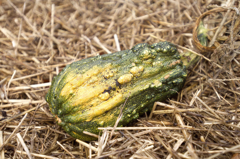 Download Gourd stock photo. Image of straw, garden, plant, crop - 29220600