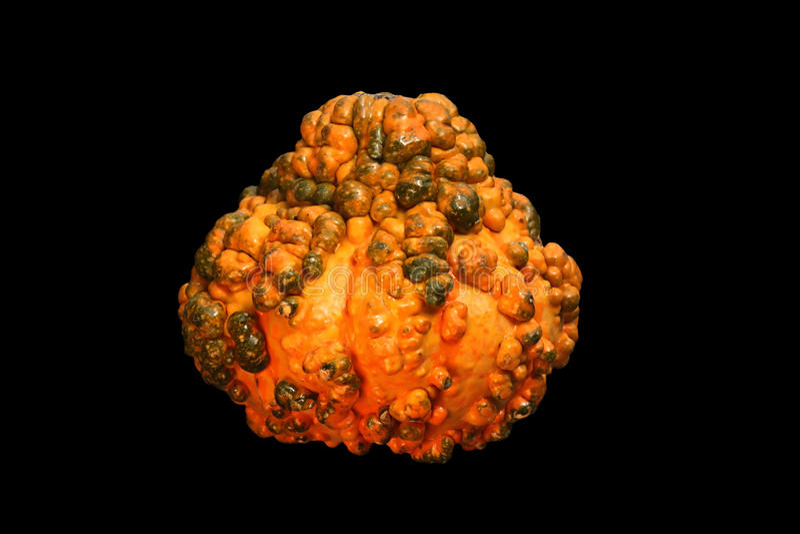 Download Gourd on Black stock image. Image of background, harvest - 16341715