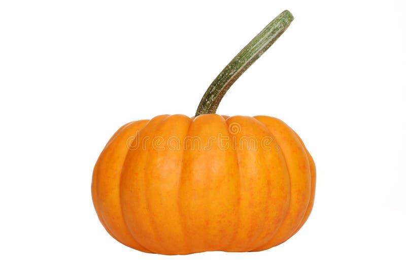 Gourd da abóbora imagem de stock royalty free