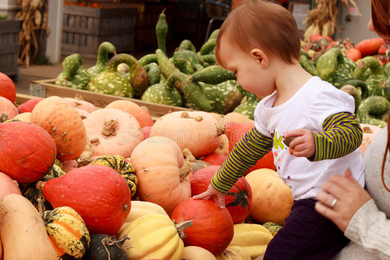 Gourd da abóbora do toque da criança fotos de stock royalty free