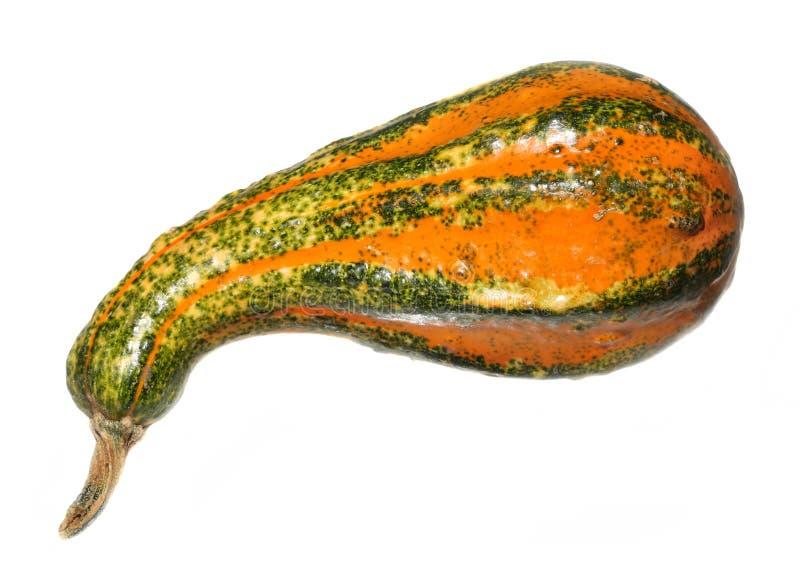 Gourd decorativo fotos de stock royalty free
