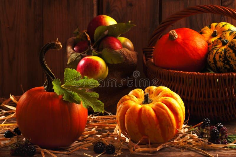 Gourd Harvest royalty free stock image
