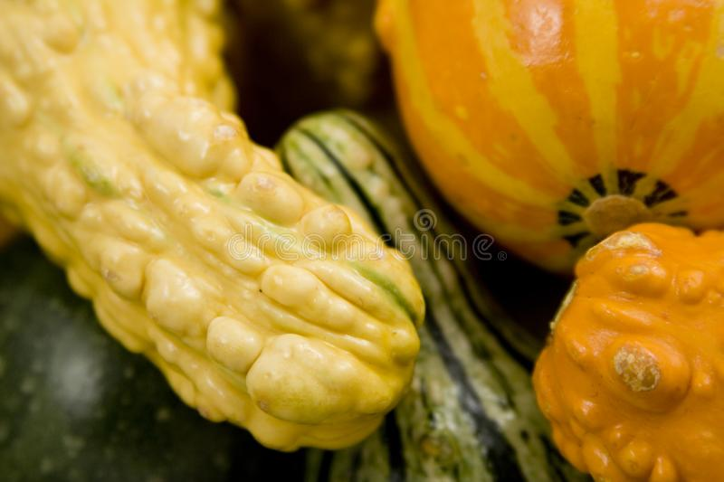 Gourd time