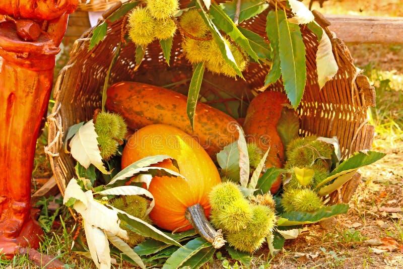 gourds каштанов стоковая фотография rf