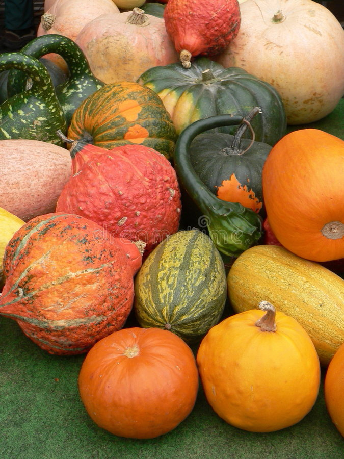 Gourds royalty free stock image