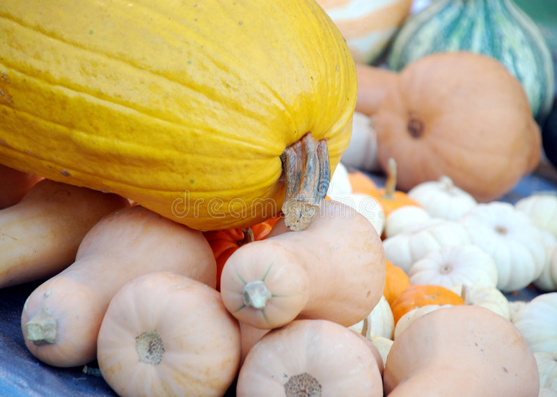 Download Fall Harvest Gourds stock image. Image of leaves, life - 7121479