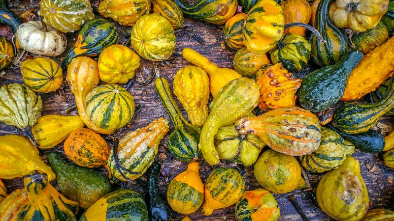 Gourds of Many Shapes and Sizes stock photo