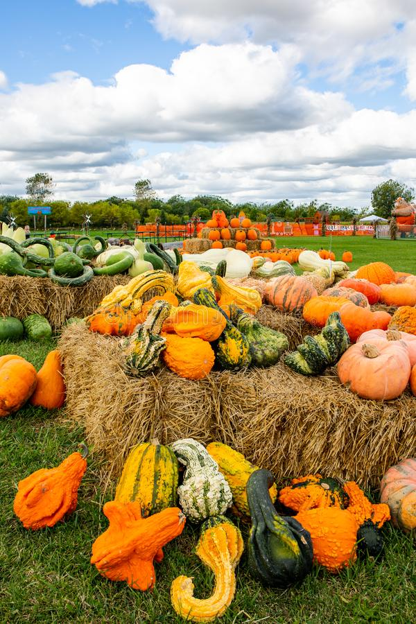Gourds on a Picturesque cloudy fall day royalty free stock photos