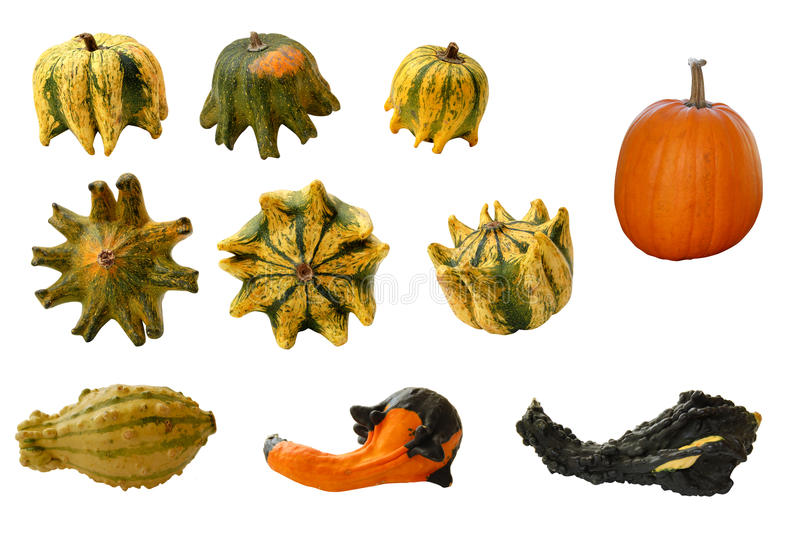 Download Gourds And Pumpkins Stock Images - Image: 26470644