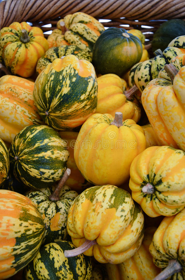 Gourds for Sale stock images