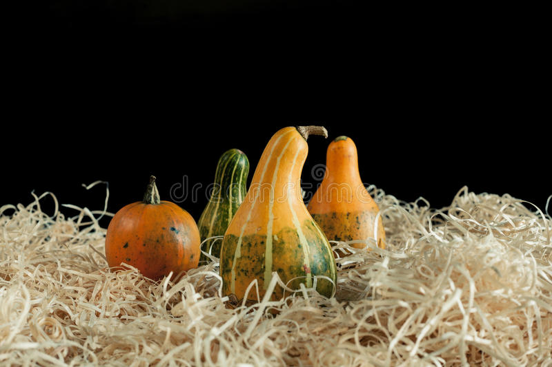 Gourds on wood chippins. Colorful gourds on a bed of wood chippings royalty free stock photos