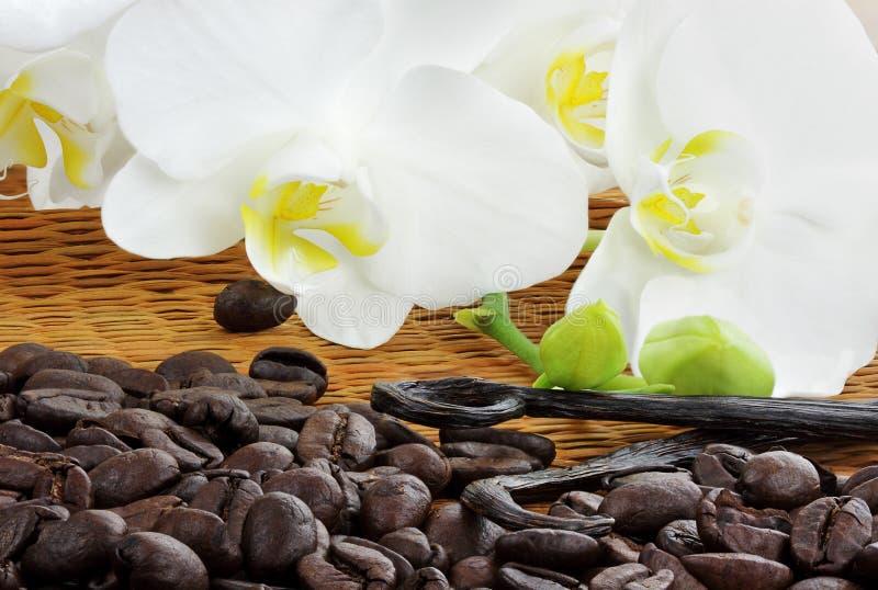 Gourmet Coffee Ingredients royalty free stock photos