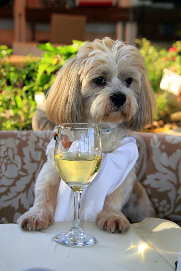 Gourmet- hund med vit wine arkivbilder