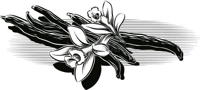 Gousses de vanille et fleurs illustration stock