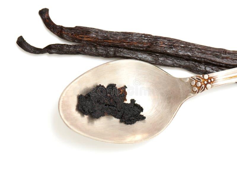 Gousses de vanille et graines image stock