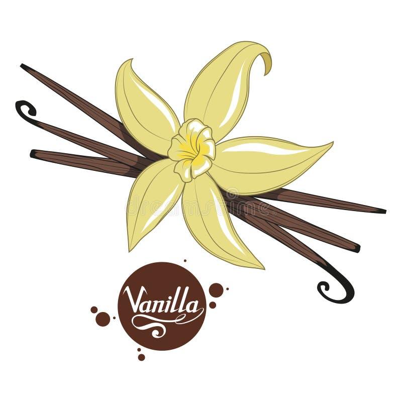 Gousses de vanille tirées par la main, ingrédient épicé, logo de fleur de vanille, aliment biologique sain, vanille d'épice sur l illustration libre de droits