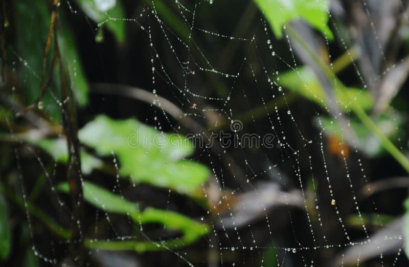 Goutte de l'eau sur le filet d'araignée dans la forêt image stock