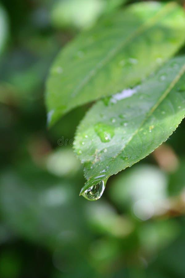 Goutte de pluie photographie stock