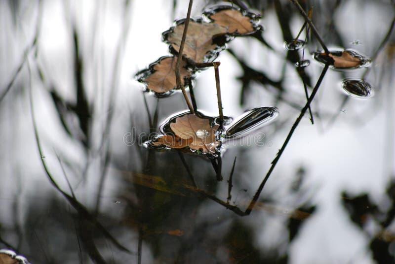 Gouttelette d'eau solitaire sur une feuille glissant au-dessus de la surface tranquille de l'eau images libres de droits