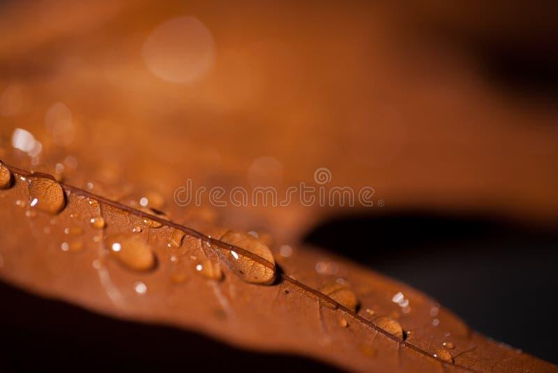 Gouttelettes d'eau sur la feuille de chêne photographie stock