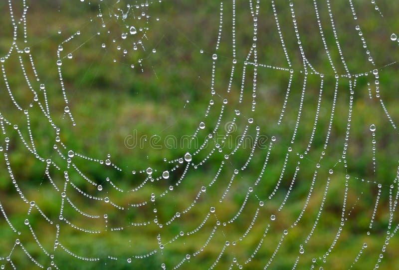 Gouttelettes sur la toile d'araignée photographie stock libre de droits