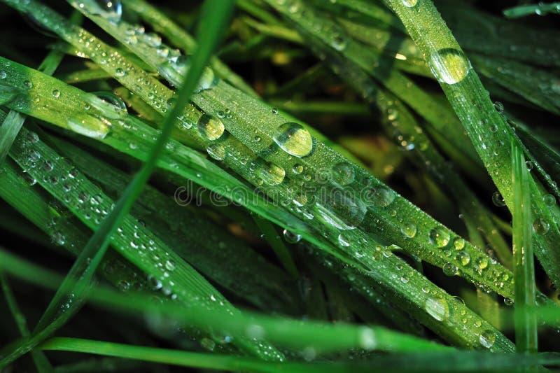 Gouttes de l'eau dans l'herbe photos libres de droits