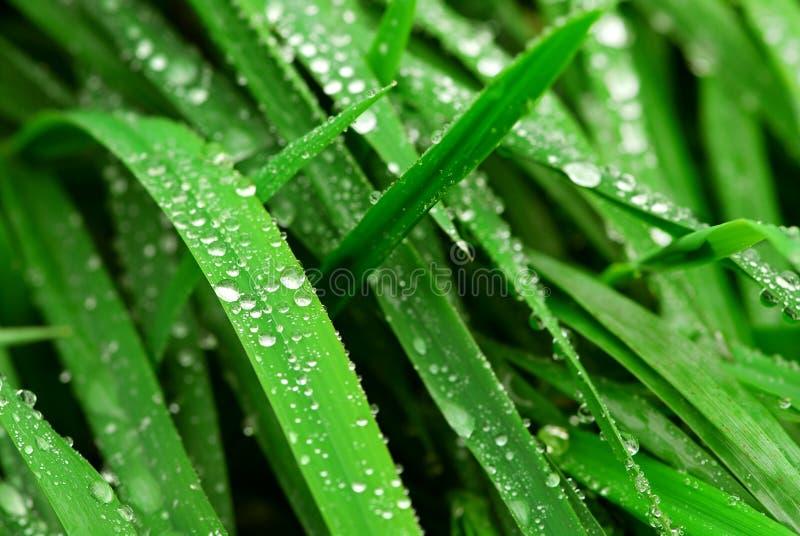 Gouttes de pluie sur l'herbe images stock
