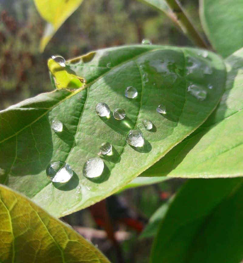 gouttes de pluie sur la feuille photos stock