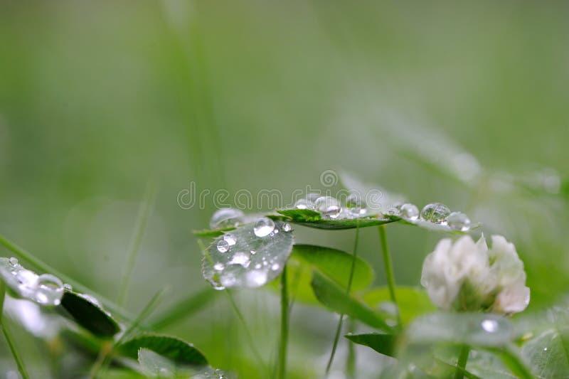 Gouttes de pluie sur la lame de cache photos stock