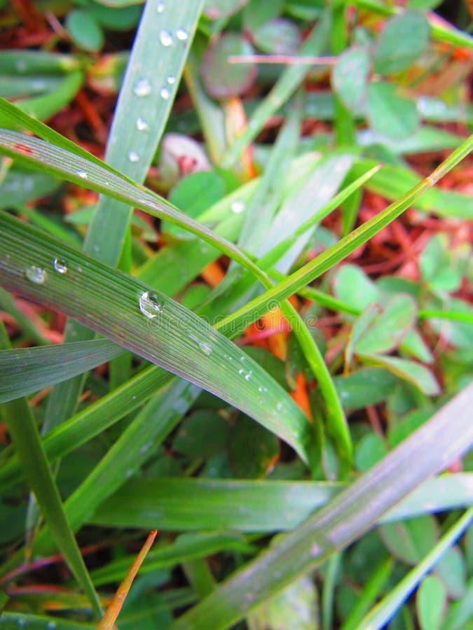 Gouttes de pluie sur une lame deux d'herbe verte dans la prairie photographie stock libre de droits